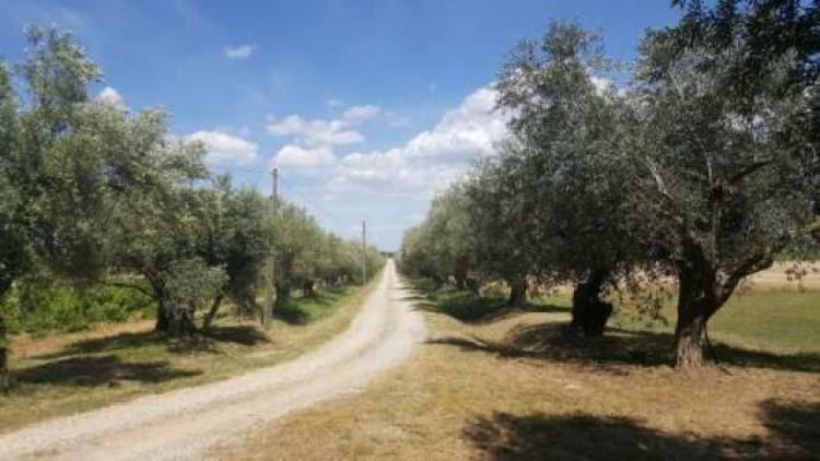 Property for Sale in Maison de Maitre, Aude, Minervois Corbières area, Occitanie, France