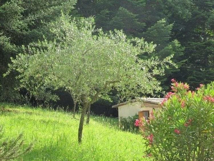 Property for Sale in Drôme, Nyons, Auvergne-Rhône-Alpes, France