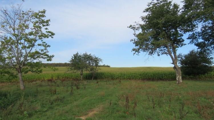 Property for Sale in Hamlet for sale on 2.5 ha, Dordogne, Savignac Ledrier, France