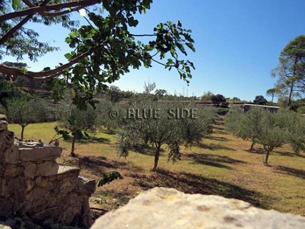 Property for Sale in Var, Brignoles, Provence-Alpes-Côte d'Azur, France