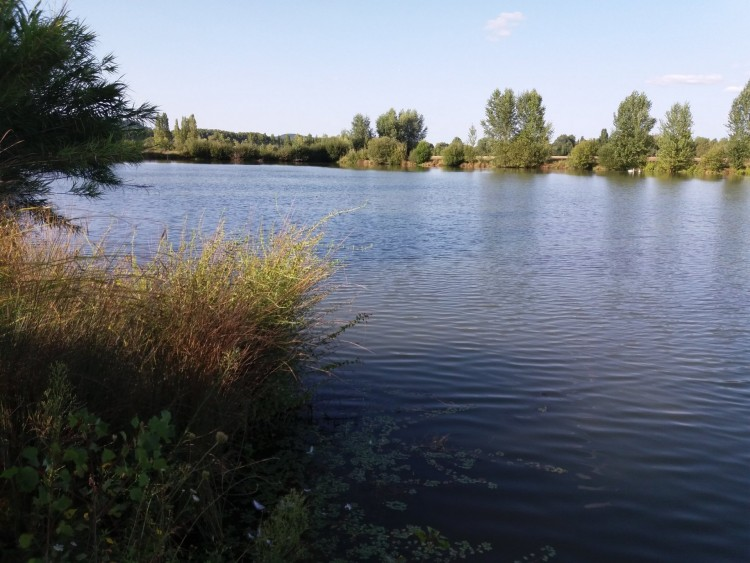 Property for Sale in Nice clean lake of 7 hectares with carp surrounded by 8 hectares good land, Lot-et-Garonne, Near LE TEMPLE SUR LOT, Lot-et-Garonne, Nouvelle-Aquitaine, France