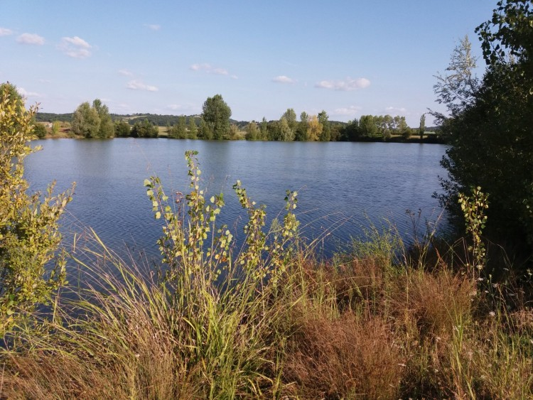 Property for Sale in Lake of 7 hectares surrounded with 5 ha of land and a barn to restore, Lot-et-Garonne, Near Granges-sur-Lot, Lot-et-Garonne, Nouvelle-Aquitaine, France