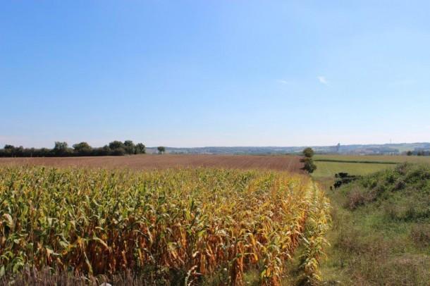 Property for Sale in Charente, 16 Les Balatries, Nouvelle-Aquitaine, France