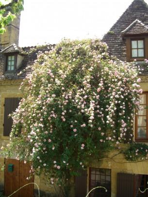Property for Sale in Dordogne, Saint-Avit-Sénieur, Nouvelle Aquitaine, France