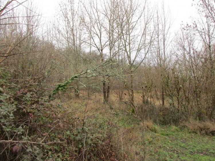 Property for Sale in Land Eymet Ref :8526t-Ey, Dordogne, Proche eymet, Nouvelle-Aquitaine, France