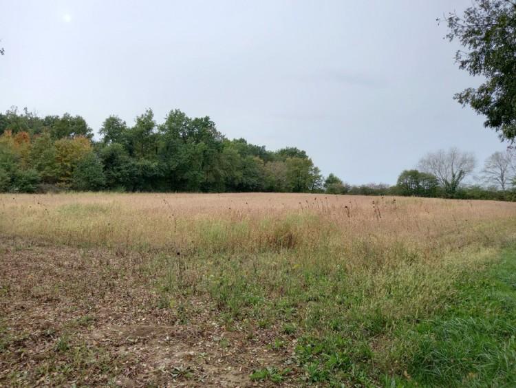 Property for Sale in Land Villereal Ref :9119-Vi, Lot-et-Garonne, Villereal, Nouvelle-Aquitaine, France