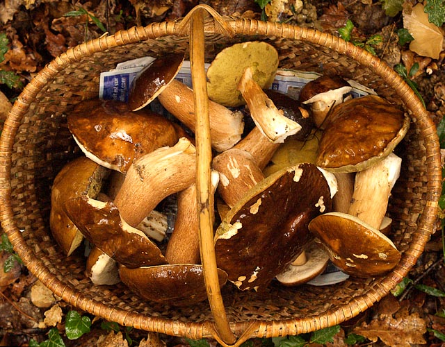 CEPS IN FRANCE -Photo by Walt Hubis via Flickr