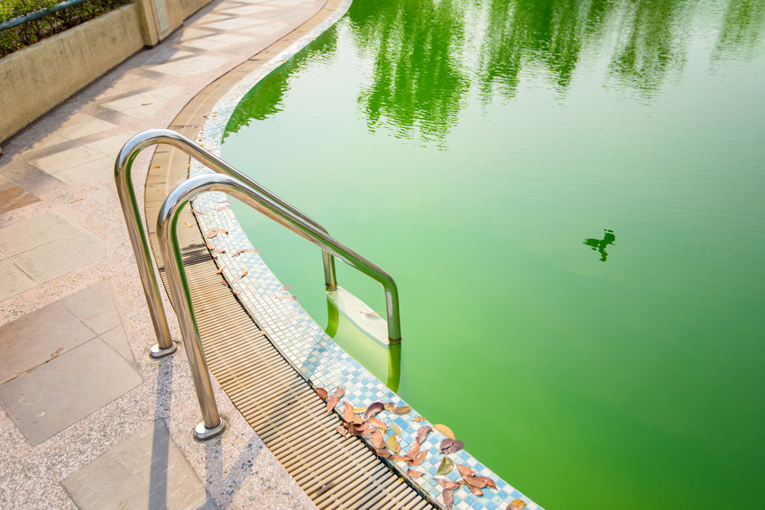 The war against pool algae and how to enlist swimming - Salt water swimming pools los angeles ...