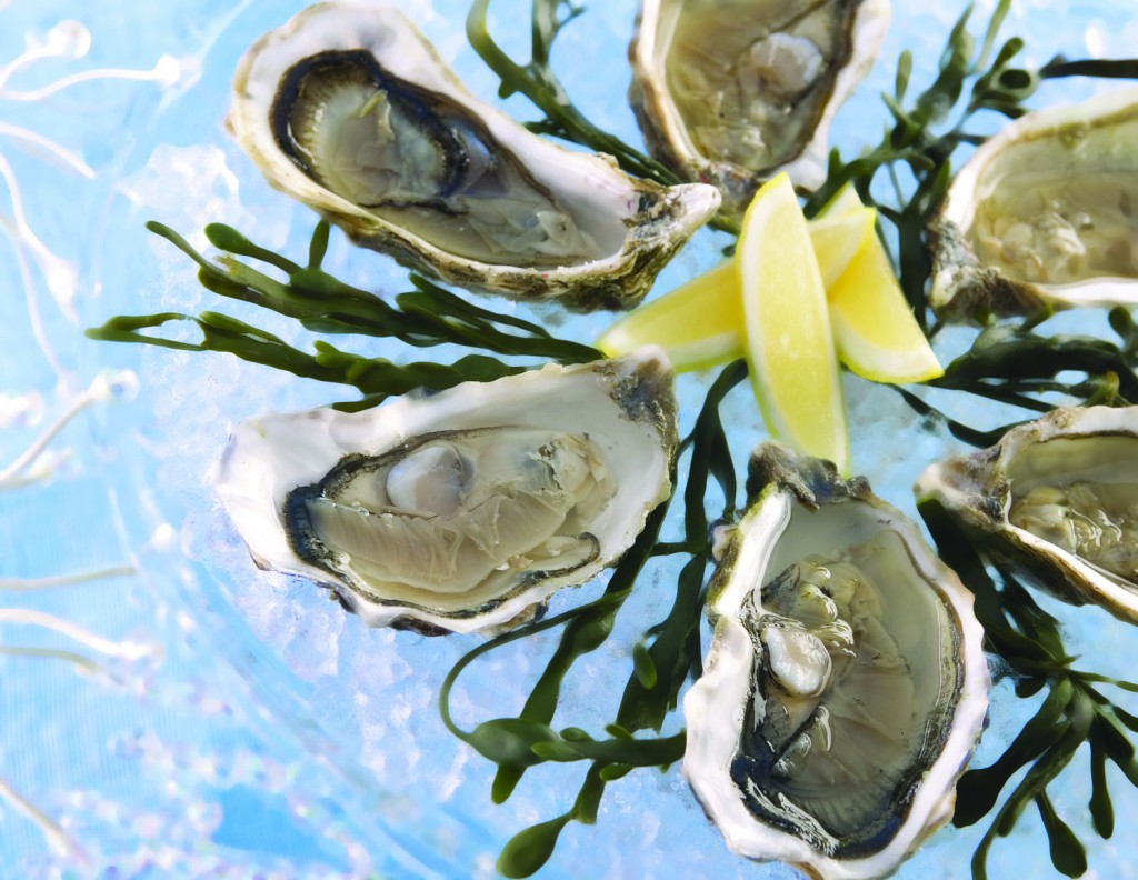 oysters oleron