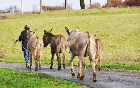 Donkey treks in the village of Varen, Tarn-et-Garonne