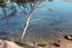 Estagnol tree near french beach
