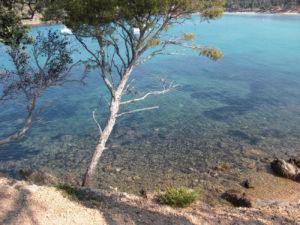 Estagnol tree on a beach in France