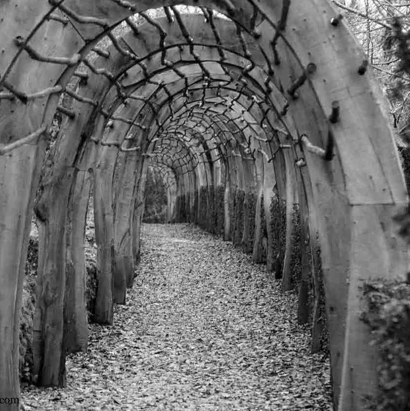 reza garden