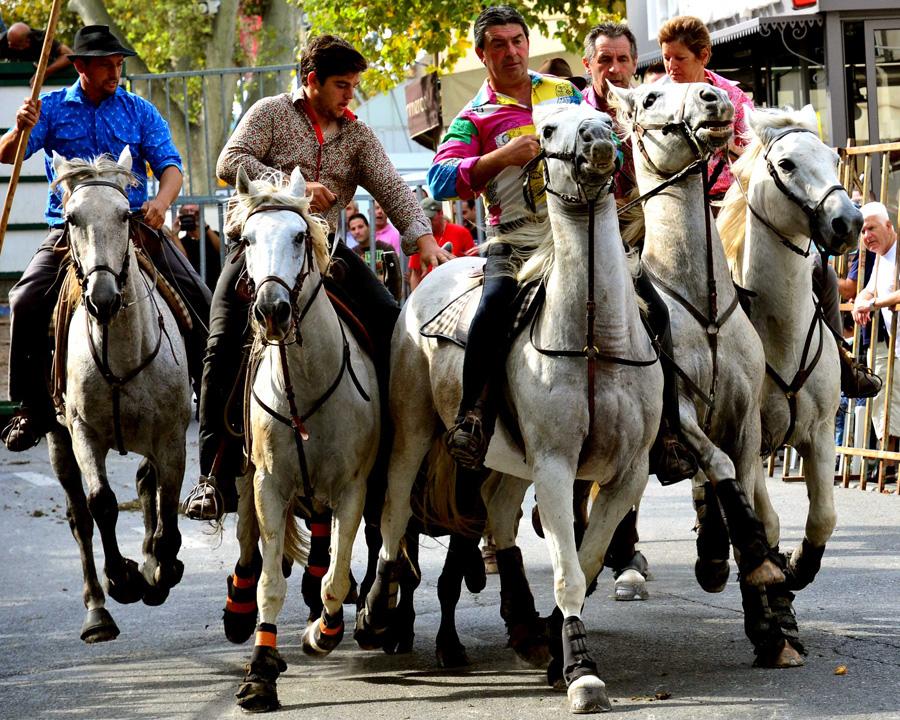 Brian Muir, Horsemen of St-Rémy de Provence