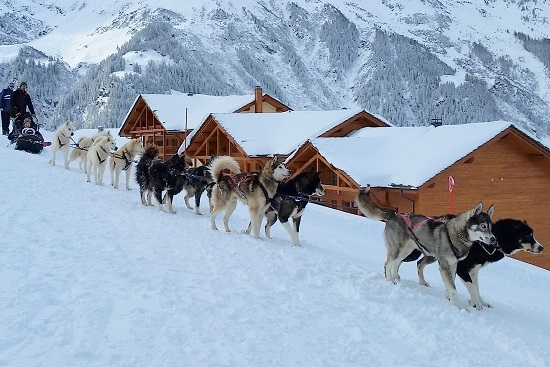 dogsledding french alps