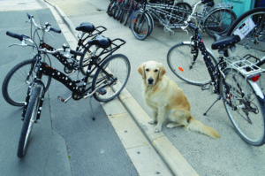 A friendly face at the bicycle hire shop