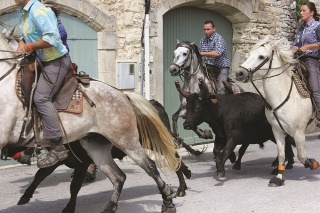 Head to towns in the Camargue and you are likely to spot gardians herding some black bulls in the most surprising places