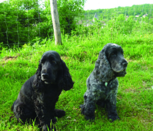 Jet set pets Archie and Lilly