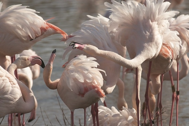 The Queen of the Camargue