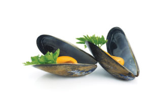 mussels cooked in their shell isolated on white background