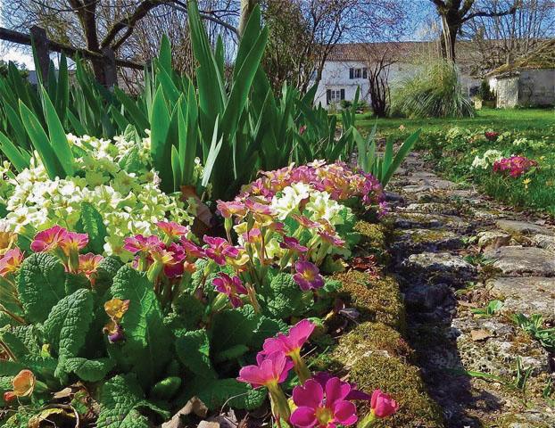 Susan Hays's garden