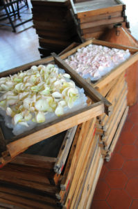 petals Grasse perfume