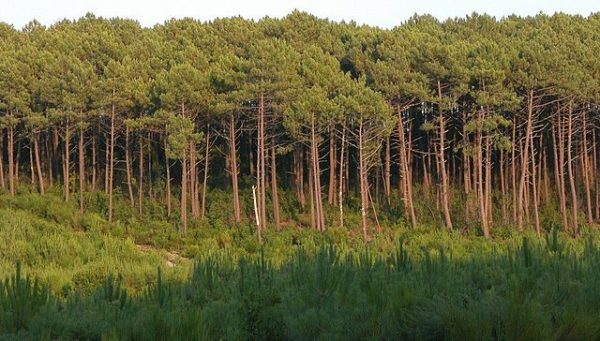 Forests in France