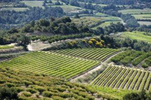 Vineyards in Côtes du Rhône
