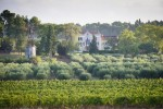 View of Domain from afar via vine & Olive groves