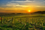 sunrise over a vineyard in the south west of france, bergerac