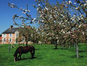 Calvados unspoilt countryside