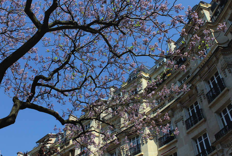 The northern part of Montmartre is particularly sought after by savvy young professionals