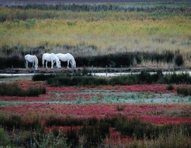 see how many wild animals you can spot in the Camargue's protected wetlands
