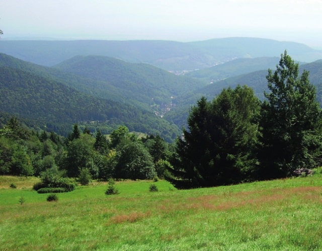 if you get giddy over greenery, try the Regional Natural Park Ballons des Vosges on for size