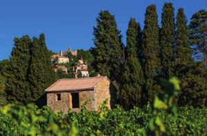 The vines of the Rasteau Côtes du Rhône label