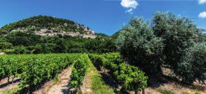 Flourishing vineyard Domaine de Mourchon in Séguret;