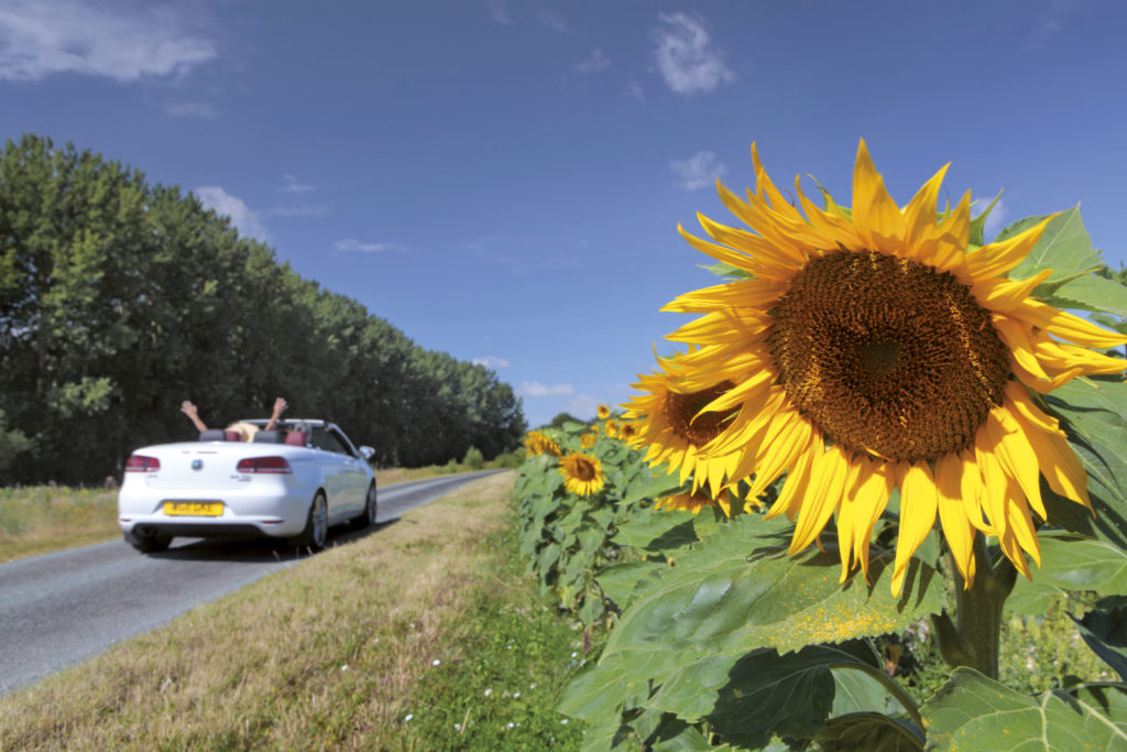 driving in france near some sunflowers