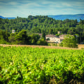 Domaine St Jacques d albas vineyard in Languedoc