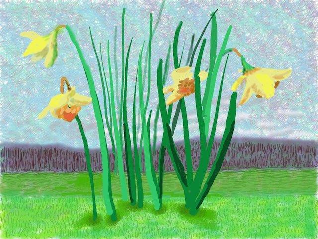 Daffodile ipad drawing