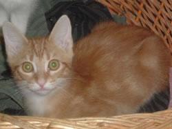 Les Chats du Quercy – Quercy Cats