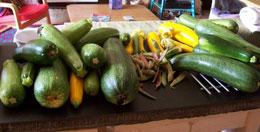 Organic Gardening Column