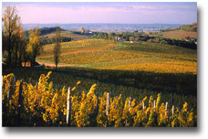 Dordogne wines – treasures to discover