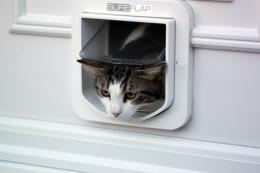 French cats say 'oui' to microchip cat flap