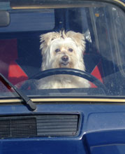 Protecting your dog from heatstroke