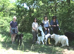 Dog Walking with Les Chiens De Figeac