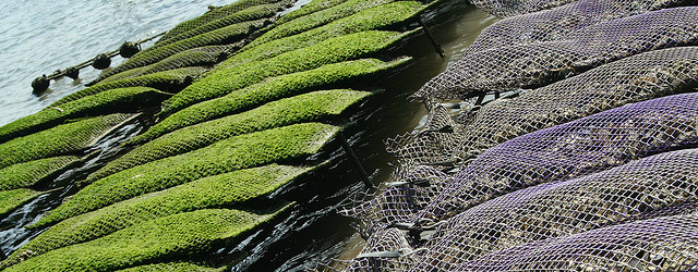 Oyster Farmers in France
