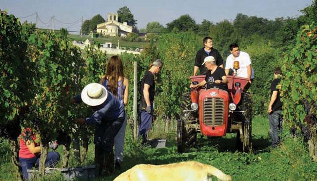 A Grape Undertaking in Gironde