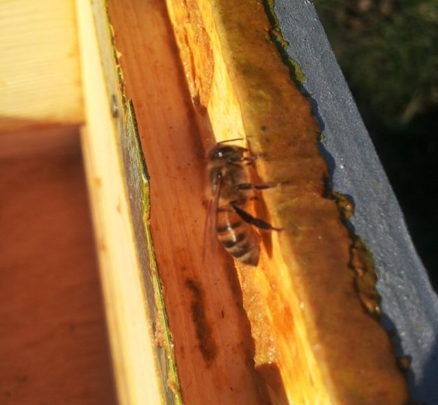 Beekeeping in the Charente – Get Ready For Spring!