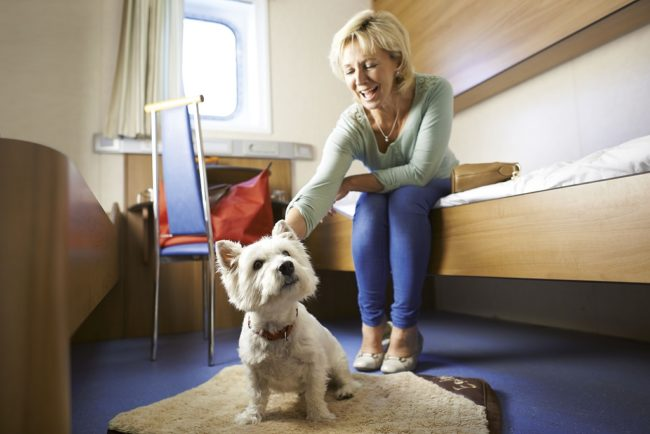Top Tips for Travelling with Pets