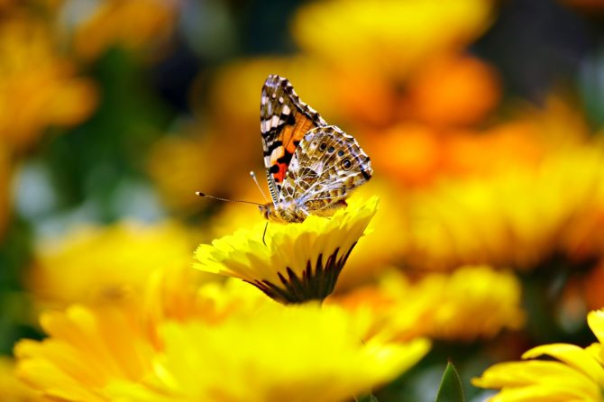 30 Wildlife Friendly Plants for Your French Garden